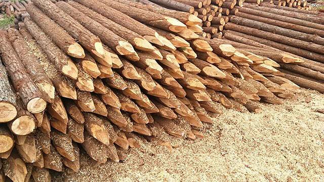 景观木桩供应