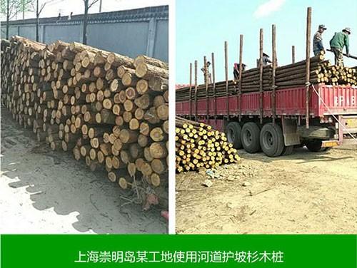上海崇明岛某工地使用河道护坡山木桩