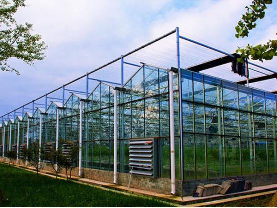 带你了解现代温室的优势有哪些?