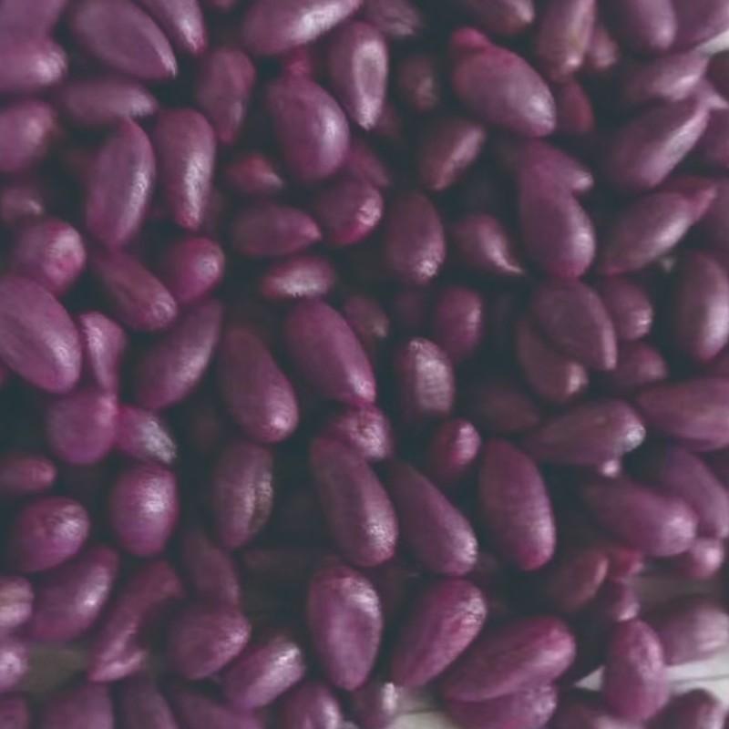 棉花种子包衣样品