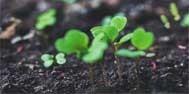 如何发现和判断土壤污染了?