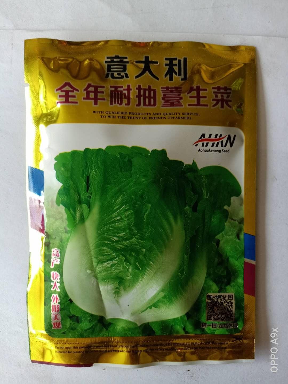 高产生菜种子批发