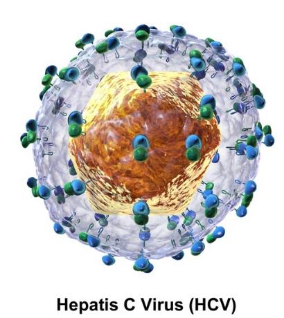 科学家从结构上揭示丙型肝炎病毒进入细胞的机制