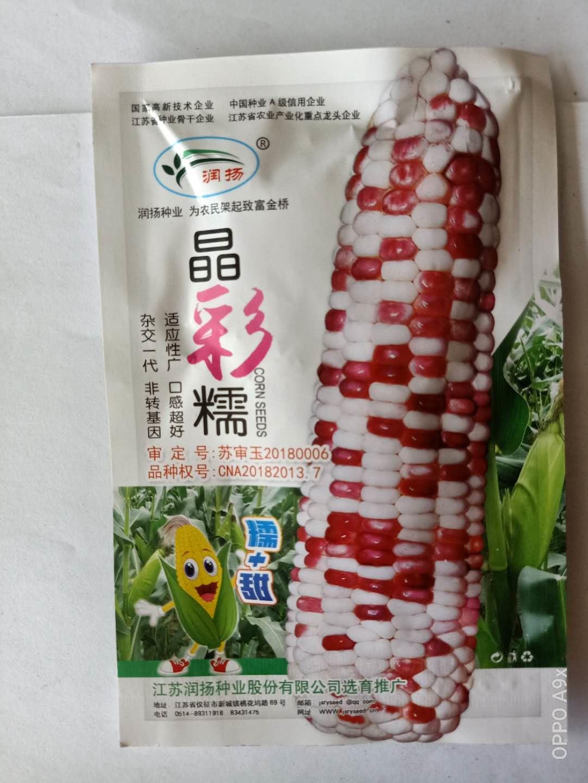 甜糯玉米种子
