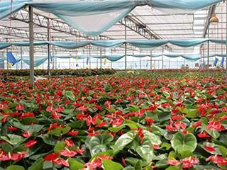 2010荥阳天时农业科技园 - - 千亩花卉2