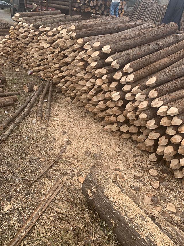 削尖杉木桩装车发货
