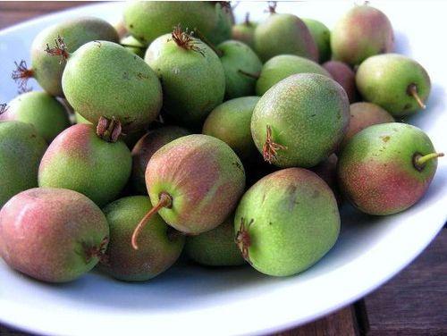 日内瓦软枣猕猴桃 种苗