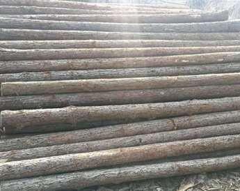南京有哪些因素影响杉木桩价格