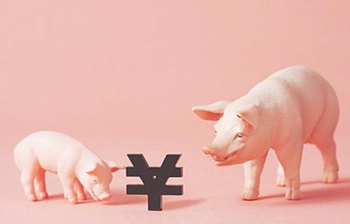 猪价反弹了,仔猪价格还会不会掉,现在抄底是最好的时分吗?