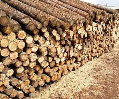 杉木桩价格区别的原因分析