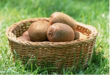 为何人们都喜欢吃猕猴桃呢?---周至猕猴桃批发
