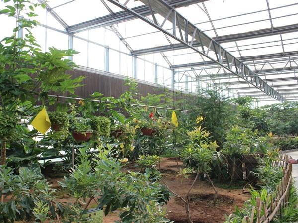 种植新模式,戈壁滩上崛起的现代农业