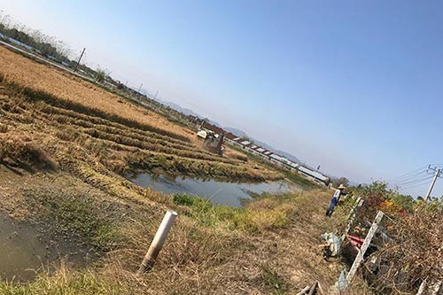 蚌埠水稻种植