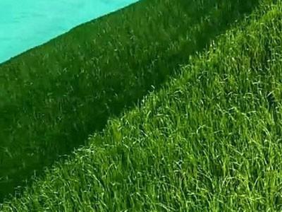 山体绿化施工