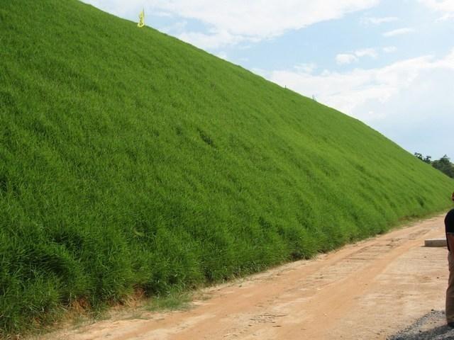公路工程常用的邊坡防護草種有哪些