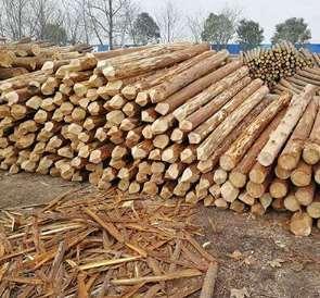 杉木桩可用性高的原因