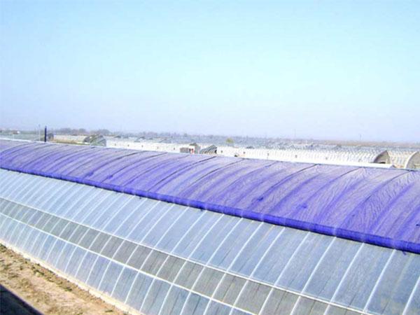 荥阳天时农业科技园——花卉基地日光温室