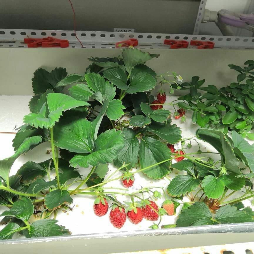 温室大棚小型立体栽培