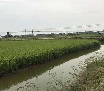 水稻种植的相关知识简介