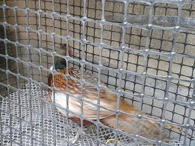 民用家禽养殖土工格栅项目
