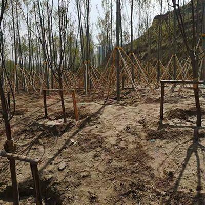 昌都园林绿化树木支撑杆供应厂家