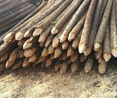 劣质杉木桩投入使用后会发生什么