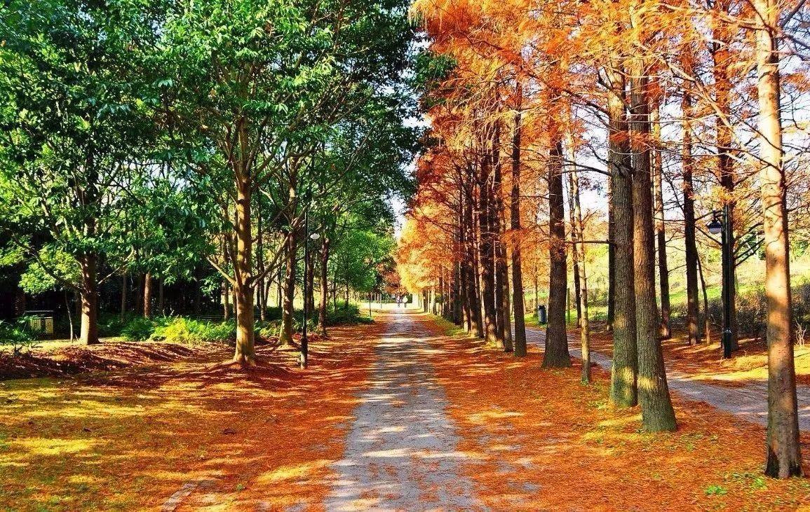 上海市林业总站召开《上海地区主要乡土树种名录》编制讨论会