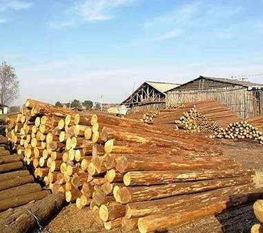 杉木桩的选购事项和选择方法