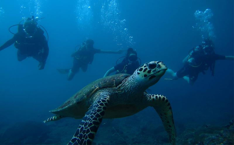 """普吉岛潜水是""""坑""""  愿者上钩"""