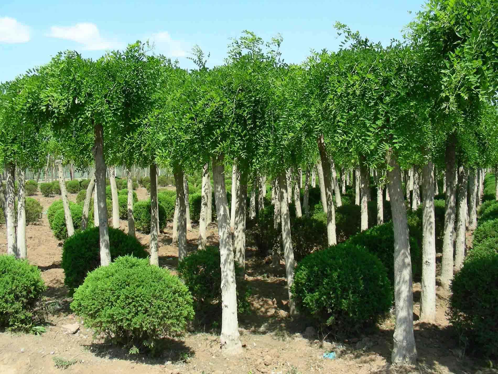 雨季苗木该如何护理