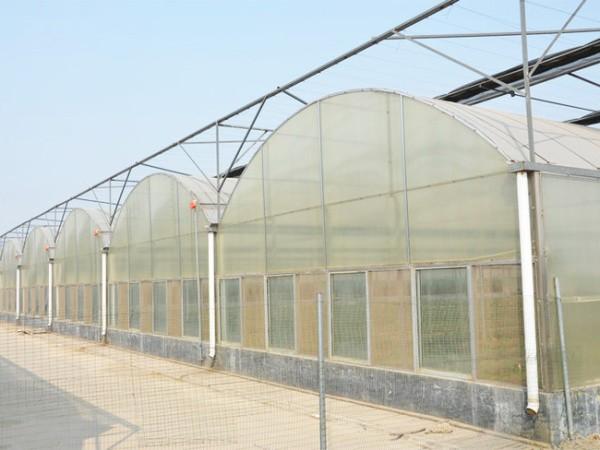 温室大棚现代农业蔬菜栽培需要注意这六点