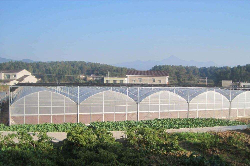 塑料大棚种蔬菜,气候调控是关键,高产种植技术