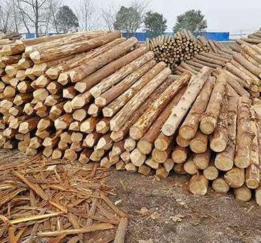关于杉木桩多方面应用知识介绍