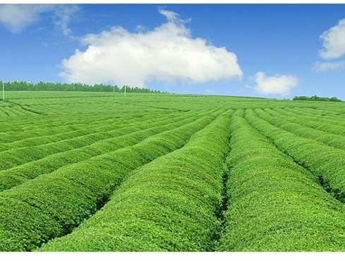 智能灌溉市场行情怎么样