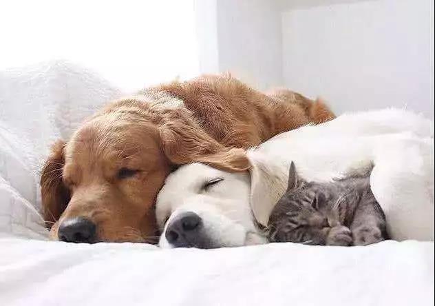宠物卫生知多少?