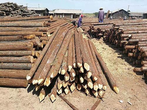 杉木桩供应
