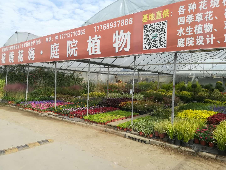 沭阳:疫情之后的复苏 花木产业拉长产业链