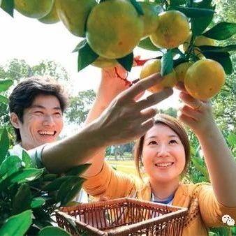 上海市林业总站召开果树、林业产业工作务虚会