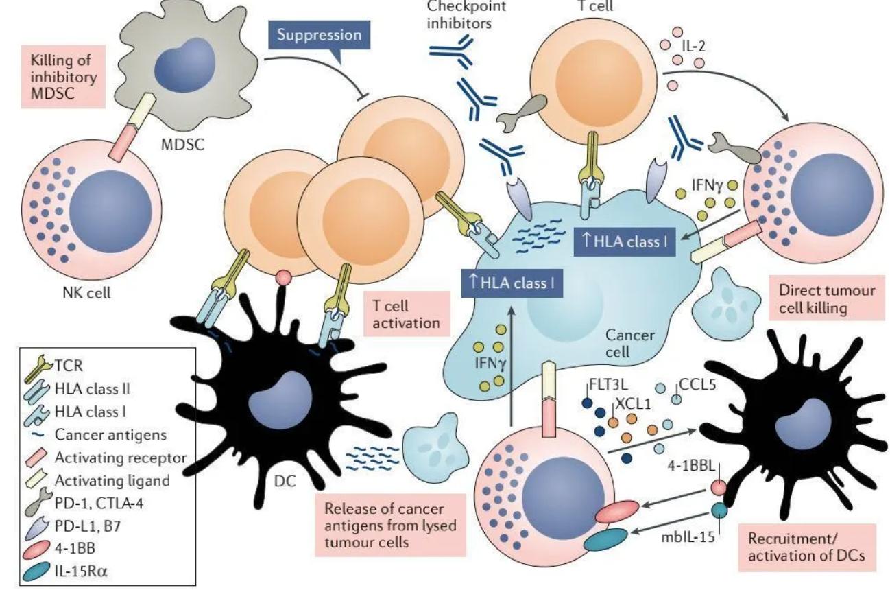 2020 NK细胞疗法临床研究进展—NK细胞可以哪些癌症