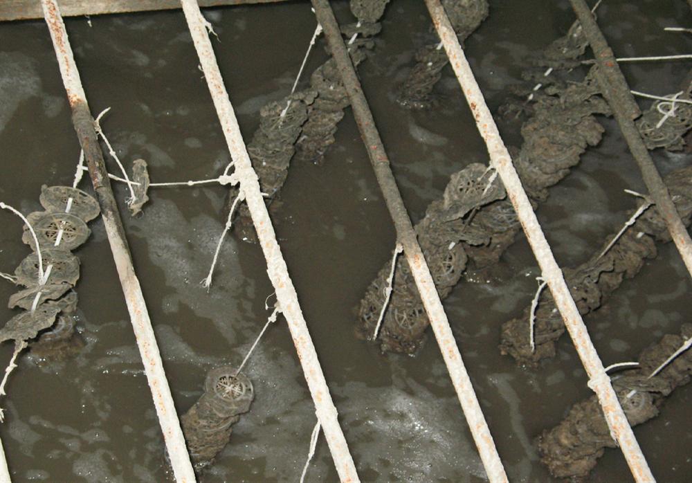 柠檬酸厂生产废水
