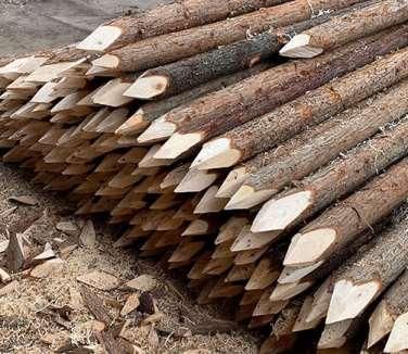 杉木桩为什么在市场上那么受欢迎