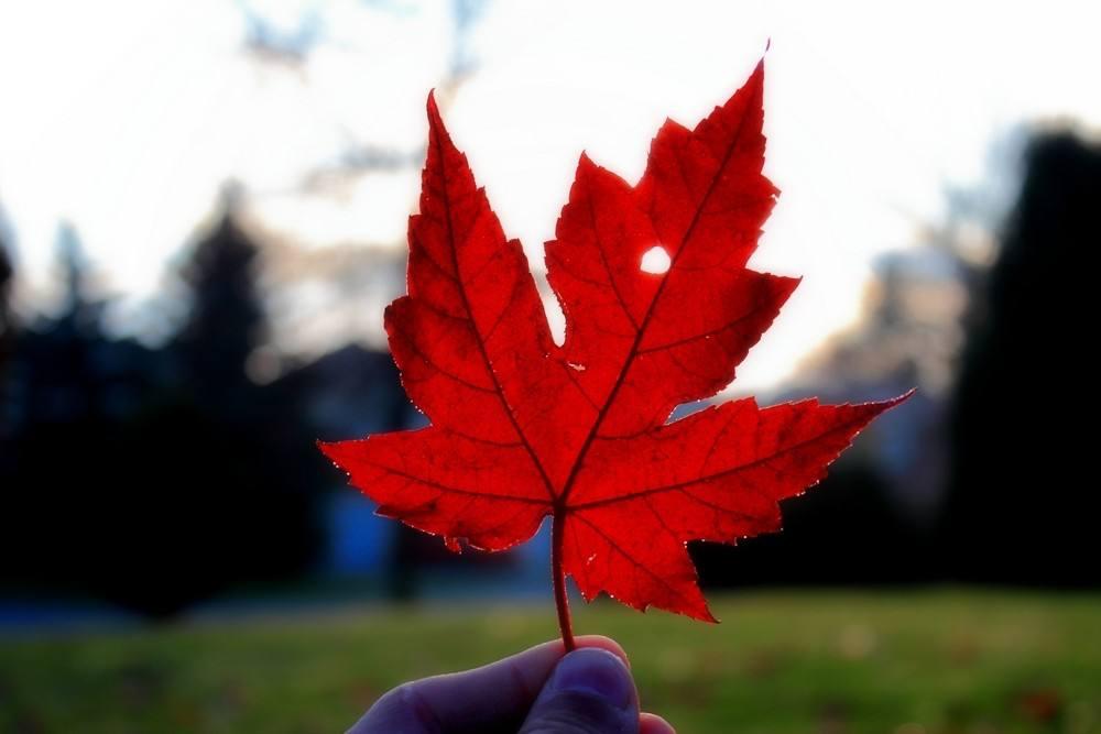 """加拿大50个""""黄金""""专业解析---数学专业"""