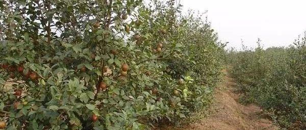 江西省鹰潭市出台油茶产业高质量发展实施意见
