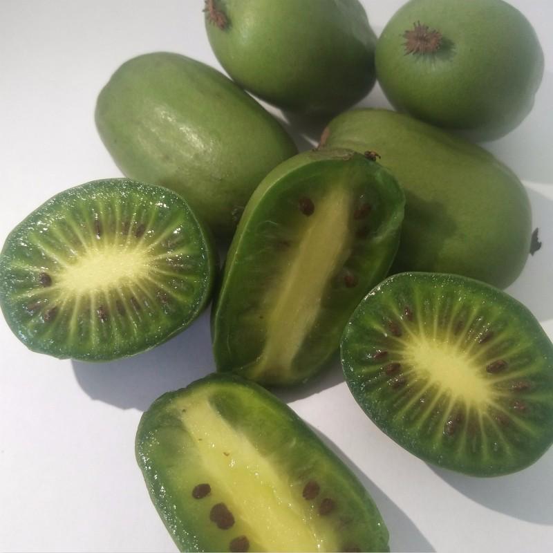 金香玉(软枣猕猴桃)种苗