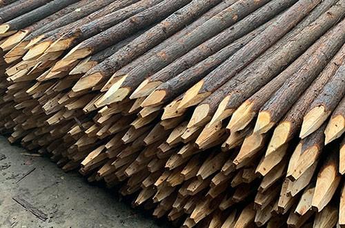 安徽杉木桩