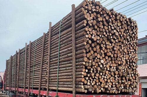 某企業采購杉原木裝車發貨