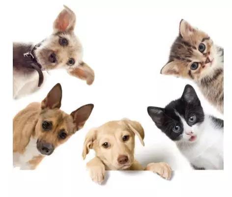 我们为什么要养宠物!