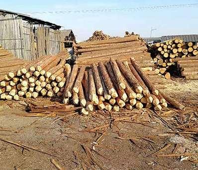 杉木桩的多方面利用须知