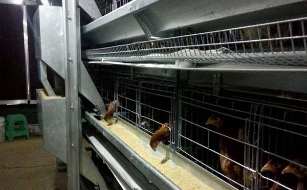 养殖设备肉鸡笼风机如何工作的呢?