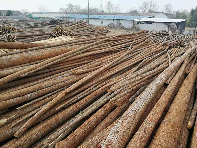 杉木原木价格保持稳定